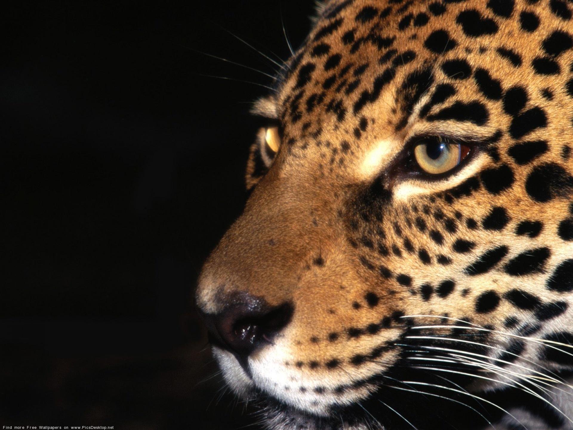 JaguarKo