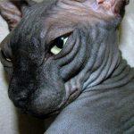 Cat1410